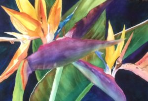 Roz Oserin, Bird of Paradise watercolor